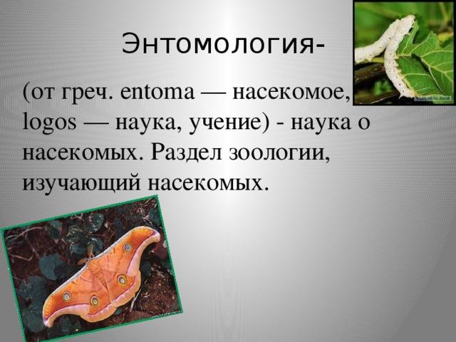 Энтомология- (от греч. entoma — насекомое, logos — наука, учение) - наука о насекомых. Раздел зоологии, изучающий насекомых.