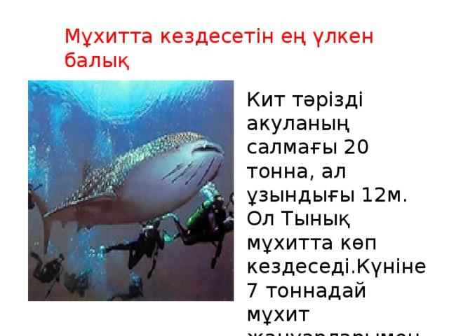 Мұхитта кездесетін ең үлкен балық Кит тәрізді акуланың салмағы 20 тонна, ал ұзындығы 12м. Ол Тынық мұхитта көп кездеседі.Күніне 7 тоннадай мұхит жануарларымен қоректенеді екен.