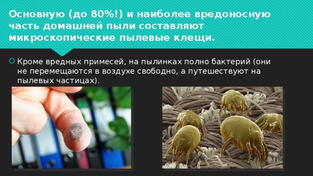 Основную (до 80%!) и наиболее вредоносную часть домашней пыли составляют микроскопические пылевые клещи.