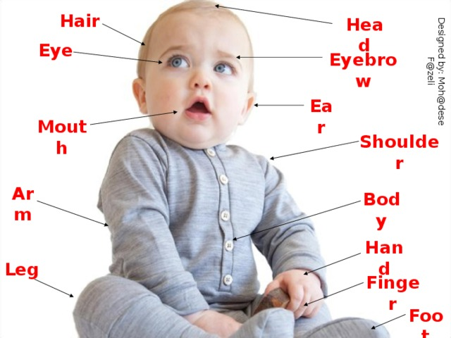 Designed by: Moh@dese F@zeli Hair Head Eye Eyebrow Ear Mouth Shoulder Arm Body Hand Leg Finger Foot