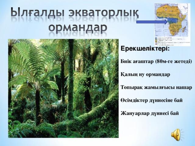 Ерекшеліктері:  Биік ағаштар (80м-ге жетеді)  Қалың ну ормандар  Топырақ жамылғысы нашар  Өсімдіктер дүниесіне бай  Жануарлар дүниесі бай