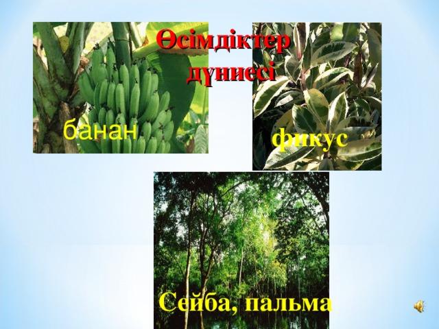 Өсімдіктер дүниесі банан фикус Сейба, пальма