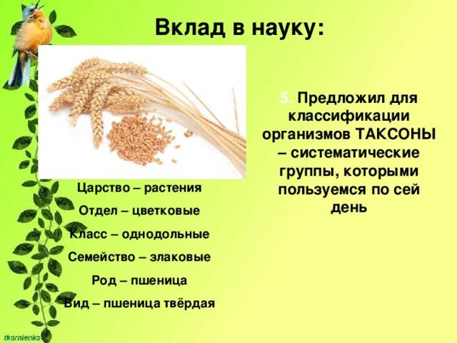 Вклад в науку: 5. Предложил для классификации организмов ТАКСОНЫ – систематические группы, которыми пользуемся по сей день Империя – клеточные Царство – растения Отдел – цветковые Класс – однодольные Семейство – злаковые Род – пшеница Вид – пшеница твёрдая