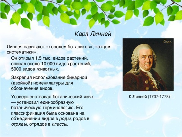Карл Линней Линнея называют «королем ботаников», «отцом систематики». Он открыл 1,5 тыс. видов растений, описал около 10 000 видов растений, 5000 видов животных. Закрепил использование бинарной (двойной) номенклатуры для обозначения видов. Усовершенствовал ботанический язык — установил единообразную ботаническую терминологию. Его классификация была основана на объединении видов в роды , родов в отряды , отрядов в классы . К.Линней (1707-1778)