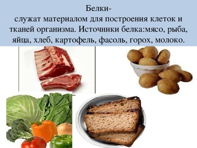 Белки-  служат материалом для построения клеток и тканей организма. Источники белка:мясо, рыба, яйца, хлеб, картофель, фасоль, горох, молоко.