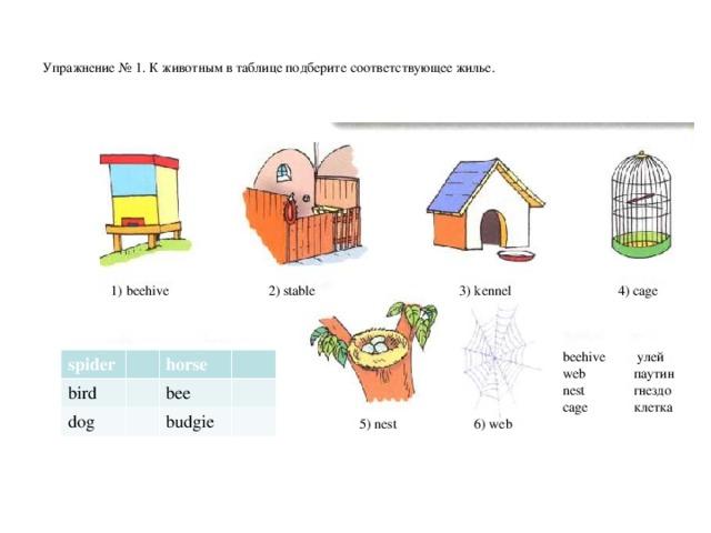 Упражнение № 1 . К животным в таблице подберите соответствующее жилье.        1) beehive 2) stable   3) kennel   4) cage beehive улей web  паутин nest  гнездо cage  клетка spider bird horse dog bee budgie  5) nest  6) web