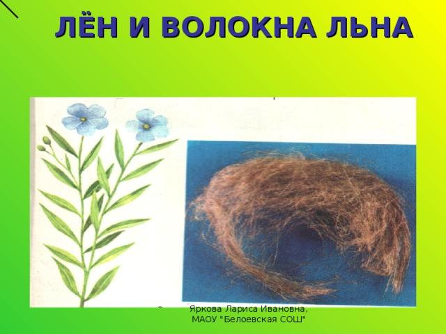 ЛЁН И ВОЛОКНА ЛЬНА Яркова Лариса Ивановна, МАОУ