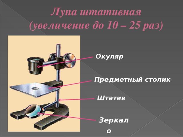 Лупа штативная  (увеличение до 10 – 25 раз) Окуляр  Предметный столик Штатив Зеркало