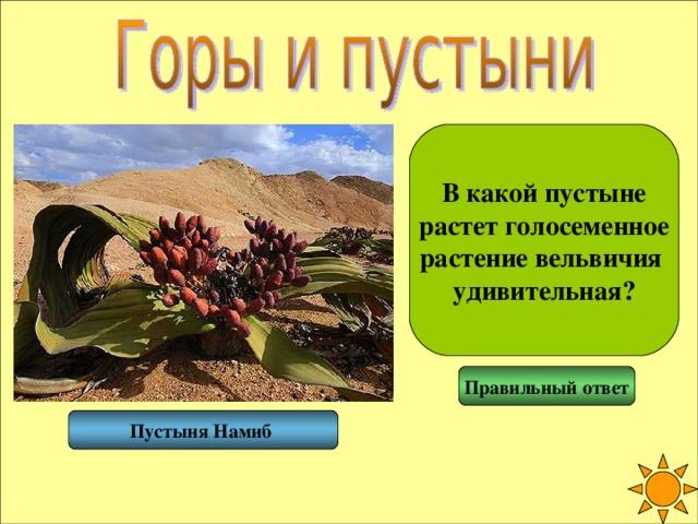 В какой пустыне растет голосеменное растение вельвичия удивительная? Правильный ответ Пустыня Намиб