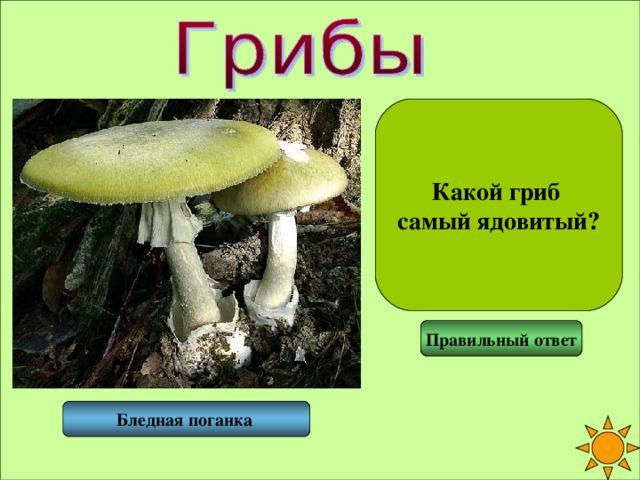 Какой гриб самый ядовитый? Правильный ответ Бледная поганка