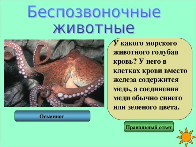 У какого морского животного голубая кровь? У него в клетках крови вместо железа содержится медь, а соединения меди обычно синего или зеленого цвета.  Осьминог Правильный ответ