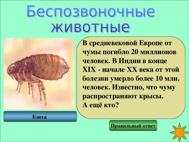 В средневековой Европе от чумы погибло 20 миллионов человек. В Индии в конце XIX - начале XX века от этой болезни умерло более 10 млн. человек. Известно, что чуму распространяют крысы. А ещё кто?  Блоха Правильный ответ