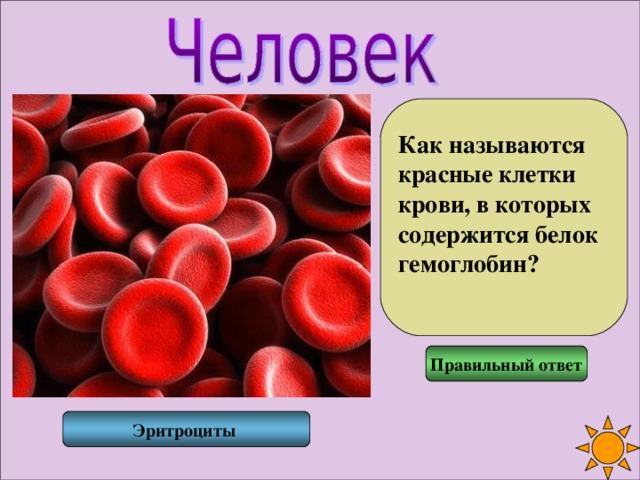 Как называются красные клетки крови, в которых содержится белок гемоглобин?  Правильный ответ Эритроциты