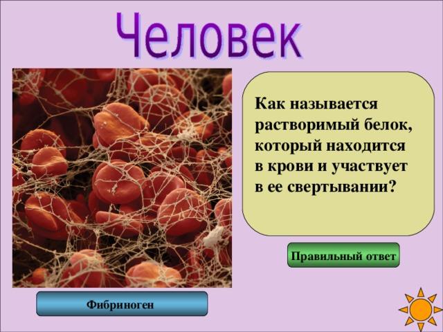 Как называется растворимый белок, который находится в крови и участвует в ее свертывании?  Правильный ответ Фибриноген