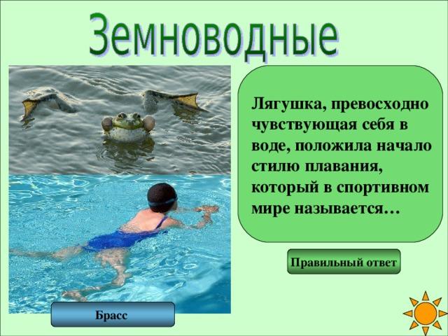 Лягушка, превосходно чувствующая себя в воде, положила начало стилю плавания, который в спортивном мире называется… Правильный ответ Брасс