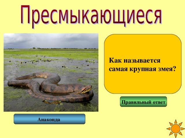 Как называется самая крупная змея? Правильный ответ Анаконда