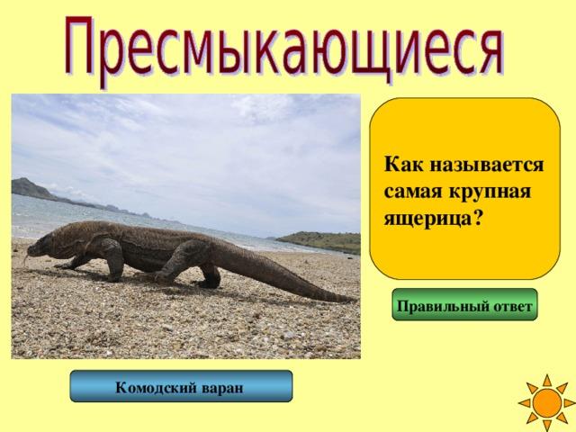 Как называется самая крупная ящерица? Правильный ответ Комодский варан