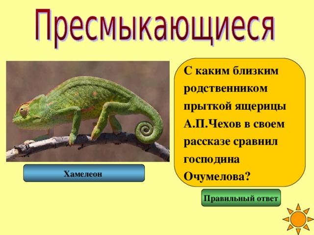 С каким близким родственником прыткой ящерицы А.П.Чехов в своем рассказе сравнил господина Очумелова? Хамелеон Правильный ответ