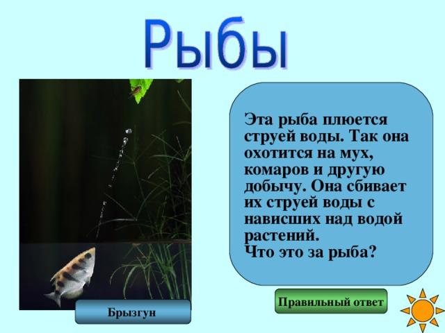 Эта рыба плюется струей воды. Так она охотится на мух, комаров и другую добычу. Она сбивает их струей воды с нависших над водой растений. Что это за рыба? Правильный ответ Брызгун