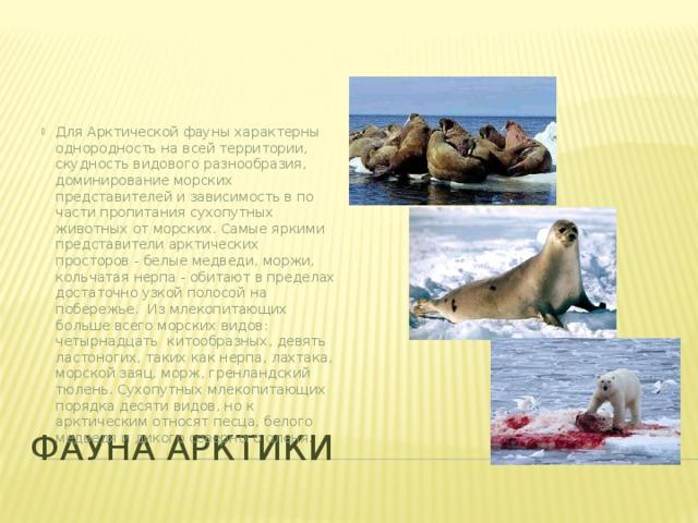 Для Арктической фауны характерны однородность на всей территории, скудность видового разнообразия, доминирование морских представителей и зависимость в по части пропитания сухопутных животных от морских. Самые яркими представители арктических просторов - белые медведи, моржи, кольчатая нерпа - обитают в пределах достаточно узкой полосой на побережье. Из млекопитающих больше всего морских видов: четырнадцать китообразных, девять ластоногих, таких как нерпа, лахтака, морской заяц, морж, гренландский тюлень. Сухопутных млекопитающих порядка десяти видов, но к арктическим относят песца, белого медведя и дикого северного оленя.