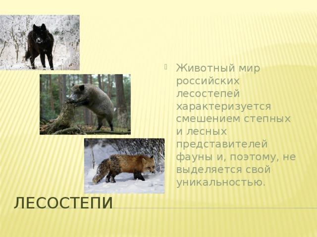Животный мир российских лесостепей характеризуется смешением степных и лесных представителей фауны и, поэтому, не выделяется свой уникальностью.