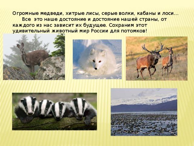Огромные медведи,хитрые лисы, серые волки, кабаны и лоси...  Все это наше достояние и достояние нашей страны, от каждого из нас зависит их будущее. Сохраним этот удивительный животный мир России для потомков!