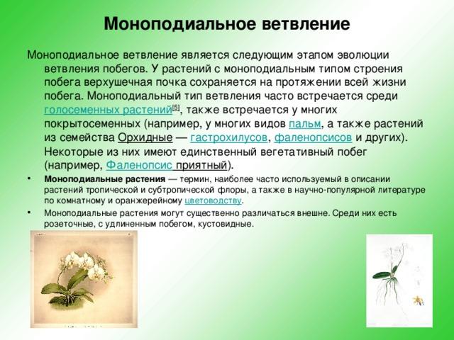 Моноподиальное ветвление  Моноподиальное ветвление является следующим этапом эволюции ветвления побегов. У растений с моноподиальным типом строения побега верхушечная почка сохраняется на протяжении всей жизни побега. Моноподиальный тип ветвления часто встречается среди голосеменных растений [5] , также встречается у многих покрытосеменных (например, у многих видов пальм , а также растений из семейства Орхидные — гастрохилусов , фаленопсисов и других). Некоторые из них имеют единственный вегетативный побег (например, Фаленопсис приятный ).