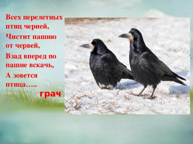 Всех перелетных птиц черней, Чистит пашню от червей, Взад вперед по пашне вскачь, А зовется птица….. грач