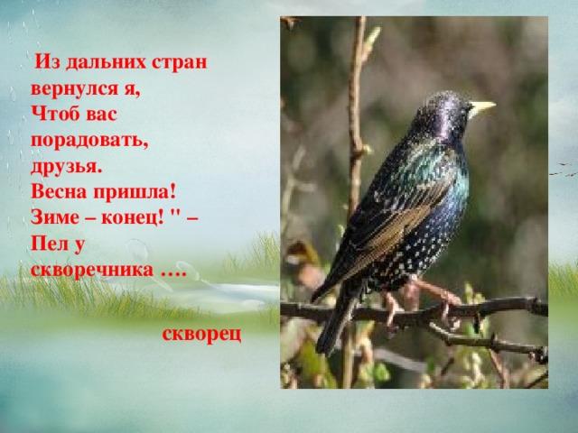 Из дальних стран вернулся я,  Чтоб вас порадовать, друзья.  Весна пришла! Зиме – конец!