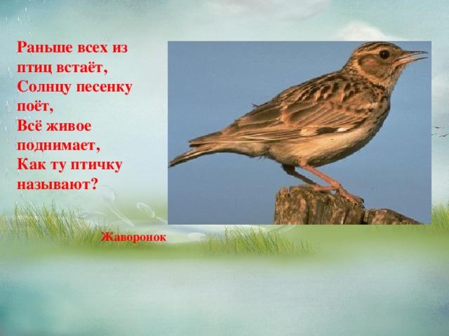 Раньше всех из птиц встаёт,  Солнцу песенку поёт,  Всё живое поднимает,  Как ту птичку называют?   Жаворонок