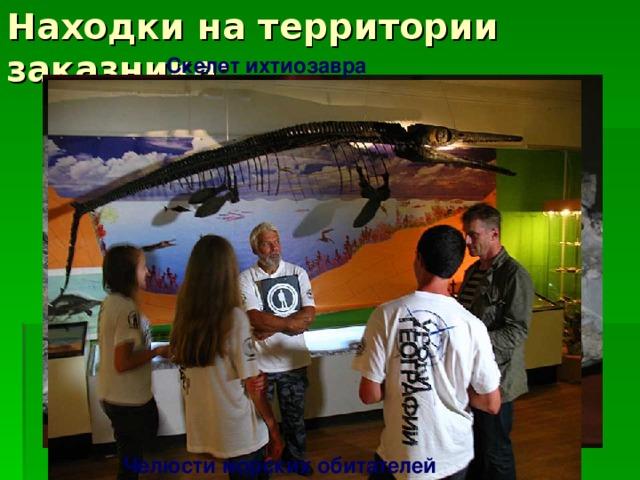 Находки на территории заказника: Скелет ихтиозавра Челюсти морских обитателей