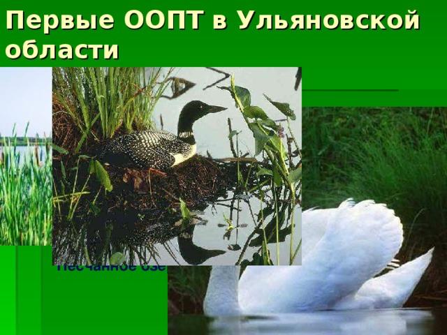 Первые ООПТ в Ульяновской области Болото Кочкарь Песчанное озеро