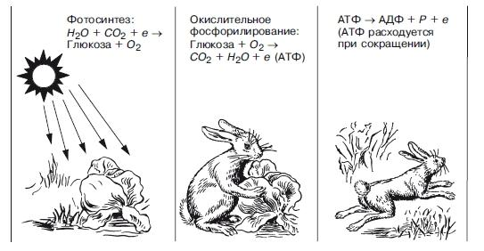 Реферат на тему экологическая система 1932