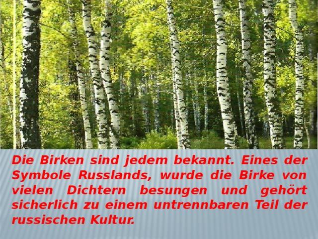 Die Birken sind jedem bekannt. Eines der Symbole Russlands, wurde die Birke von vielen Dichtern besungen und gehört sicherlich zu einem untrennbaren Teil der russischen Kultur.