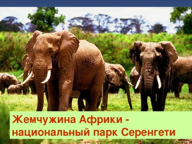 Жемчужина Африки - национальный парк Серенгети