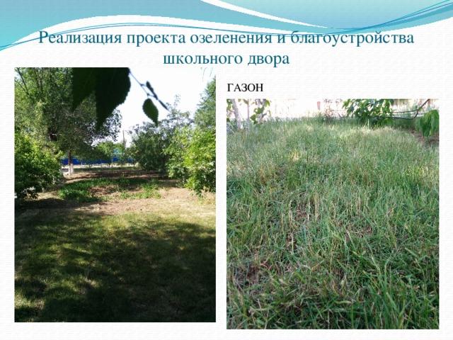 Реализация проекта озеленения и благоустройства школьного двора ГАЗОН