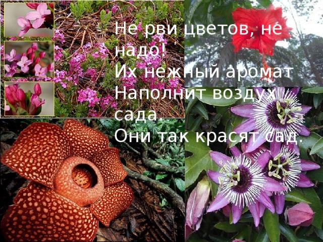 Не рви цветов, не надо! Их нежный аромат Наполнит воздух сада. Они так красят сад.