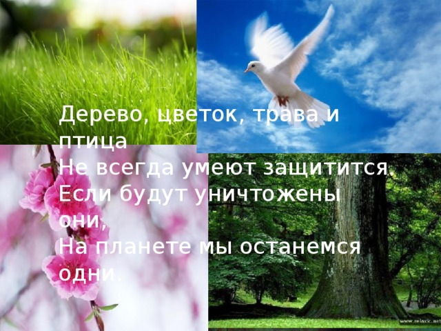 Дерево, цветок, трава и птица Не всегда умеют защитится. Если будут уничтожены они, На планете мы останемся одни.