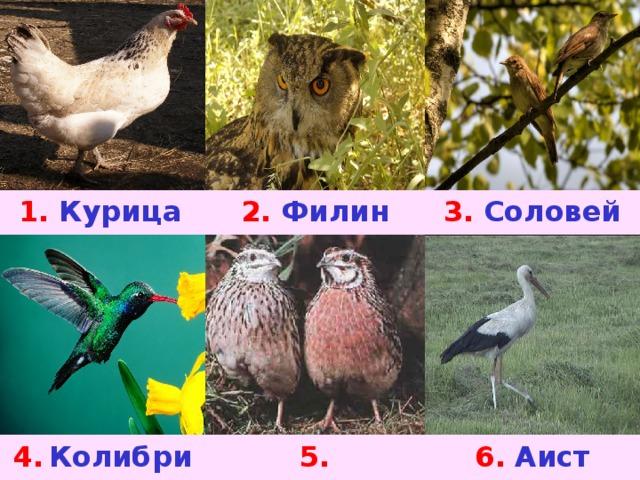 1. Курица 2.  Филин 3.  Соловей 4.  Колибри 5. Перепелка 6.  Аист