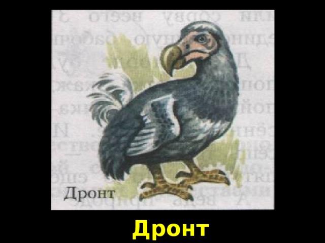 Дронт