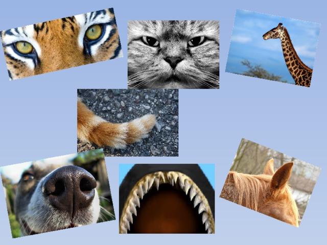 отгадать животное по картинке