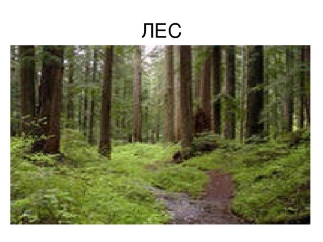 Самую большую территорию занимают леса