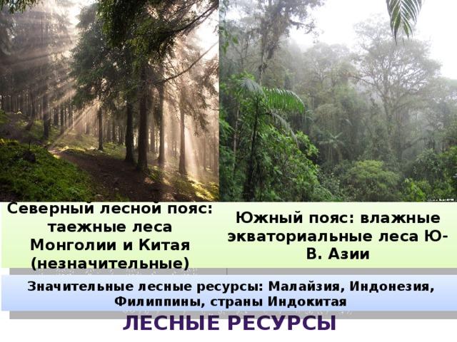 Северный лесной пояс: таежные леса Монголии и Китая (незначительные) Южный пояс: влажные экваториальные леса Ю-В. Азии Значительные лесные ресурсы: Малайзия, Индонезия, Филиппины, страны Индокитая Лесные ресурсы