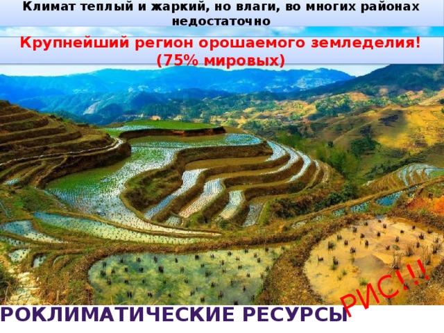 Климат теплый и жаркий, но влаги, во многих районах недостаточно РИС!!! Крупнейший регион орошаемого земледелия! (75% мировых) Агроклиматические ресурсы