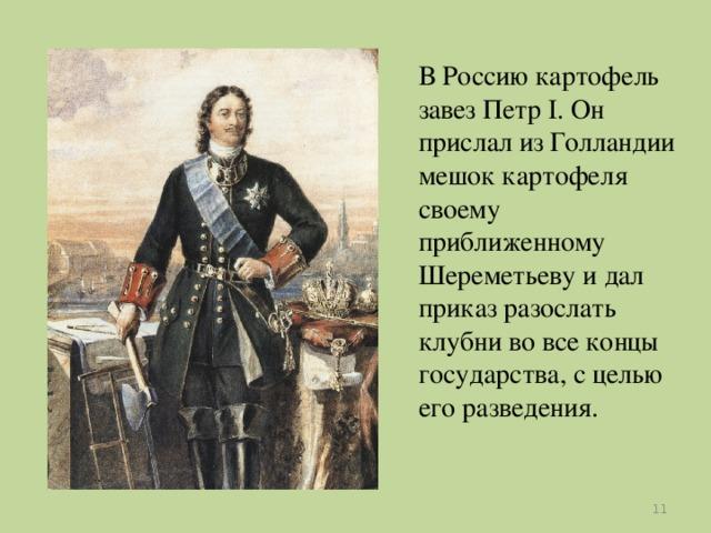 В Россию картофель завез Петр I. Он прислал из Голландии мешок картофеля своему приближенному Шереметьеву и дал приказ разослать клубни во все концы государства, с целью его разведения.