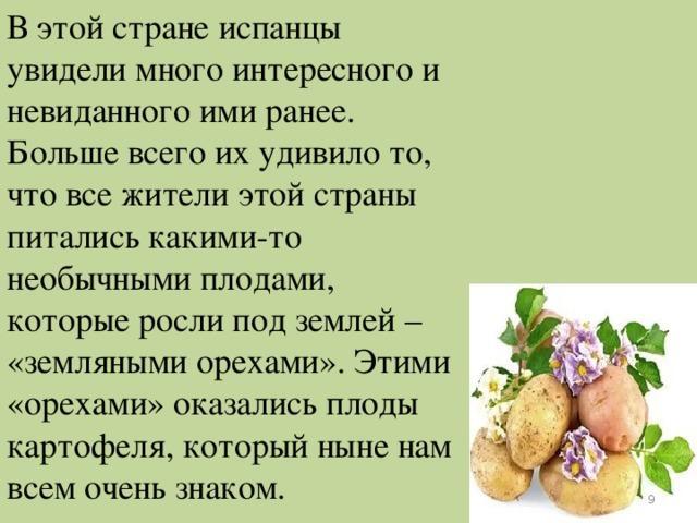 В этой стране испанцы увидели много интересного и невиданного ими ранее. Больше всего их удивило то, что все жители этой страны питались какими-то необычными плодами, которые росли под землей – «земляными орехами». Этими «орехами» оказались плоды картофеля, который ныне нам всем очень знаком.