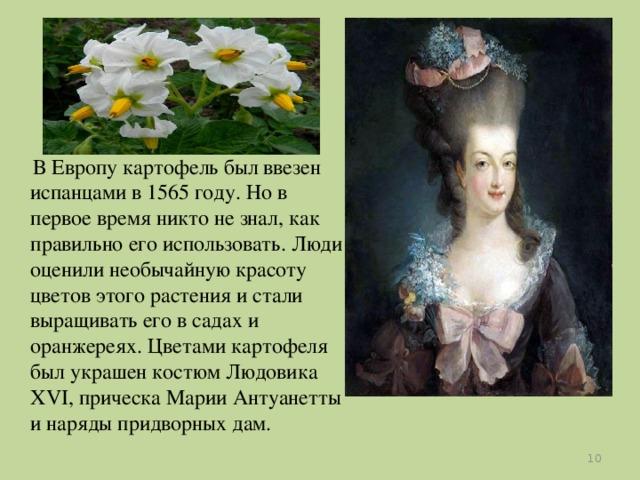 В Европу картофель был ввезен испанцами в 1565 году. Но в первое время никто не знал, как правильно его использовать. Люди оценили необычайную красоту цветов этого растения и стали выращивать его в садах и оранжереях. Цветами картофеля был украшен костюм Людовика XVI, прическа Марии Антуанетты и наряды придворных дам.