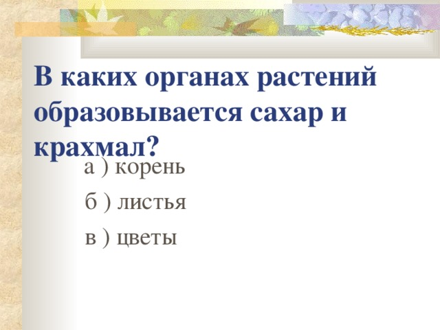 В каких органах растений образовывается сахар и крахмал?  а ) корень  б ) листья  в ) цветы