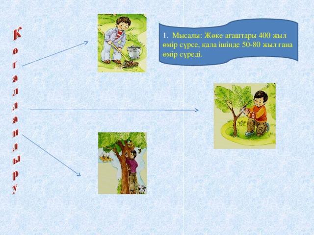 1. Мысалы: Жөке ағаштары 400 жыл өмір сүрсе, қала ішінде 50-80 жыл ғана өмір сүреді.
