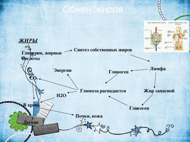 Обмен жиров ЖИРЫ Синтез собственных жиров Глицерин, жирные кислоты Лимфа Энергии Гликоген СO 2 Глюкоза распадается Жир запасной H2O В кровь Гликоген Почки, кожа Легкие